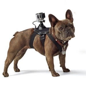 Fetch dog harness cinghia pettorale montare per GoPro Hero 4/3 +/3/2/1 SJ4000 SJ5000 SJ6000 Xiaomi Yi (GP300)-nero