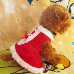 Costume Christmas Dress for Small Dog for Winter Spring - S