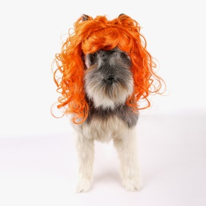 Funny Pet Curly Hair Costume Wig - Style A