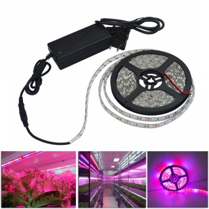 JIAWEN 30W 5M 300 x 5050 SMD imperméable à l'eau LED Grow Grow Strip Light Lamp-EU bouchon
